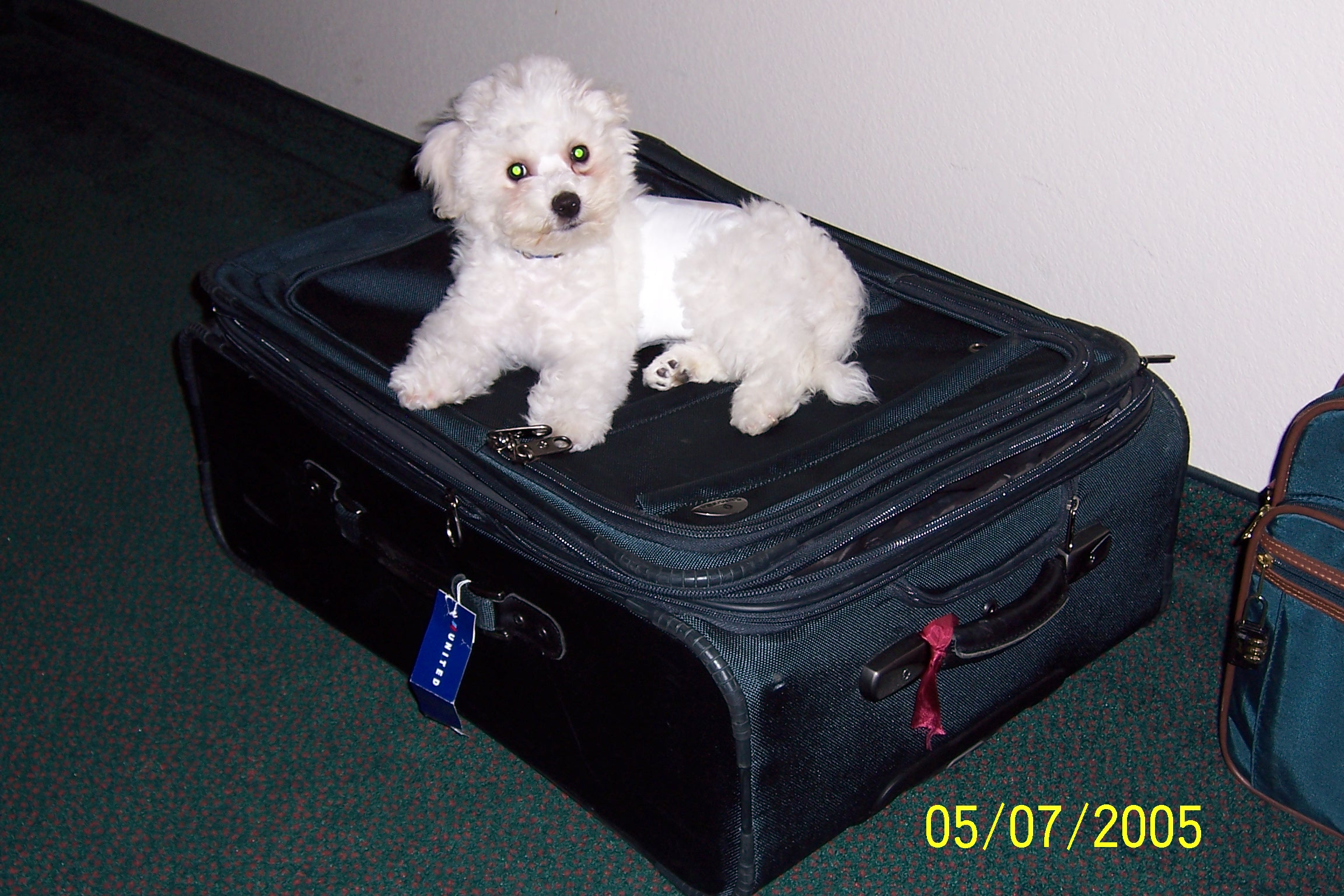5/7/2005: Ready and anxious to go home with us!