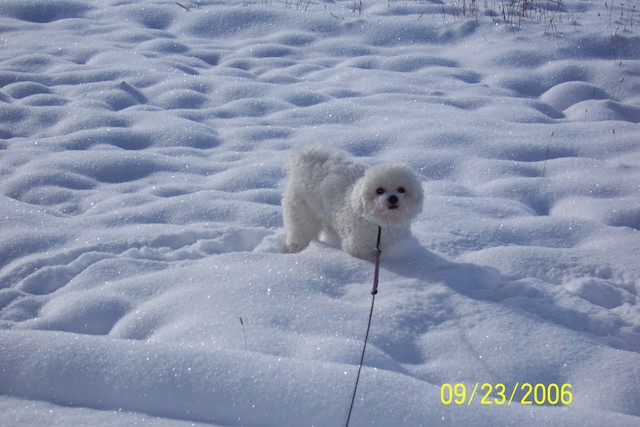 9/23/2006: Romping in the snow at 9700 feet up in the Rockies--on the last day of summer!