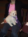 5/6/2005: QBit in Carol's lap at the Bichon Frise Nationals in Indianapolis