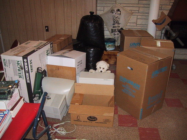 5/17/2005: I had to build a jail out of dead computers and cardbord boxes in Carol's mom's basement to keep the incontinent little devil from making messes while I worked on the computer a few feet away. He's quite the jumper and was very good at getting out.