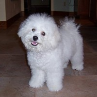 8/4/2005: Six months old and freshly brushed
