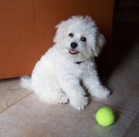 6/6/2005: Four months old and ready to play